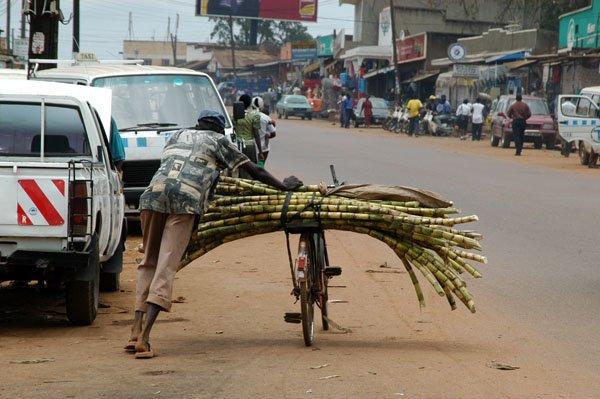 Man biking around selling sugar cane